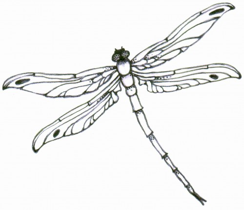 Gallery For gt Dragonfly Tattoo Art